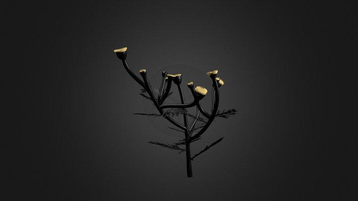 Cammomile 3D Model