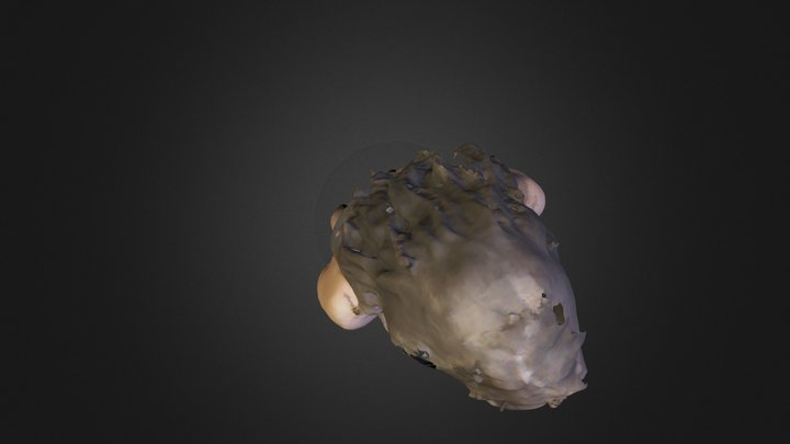 test.ply 3D Model