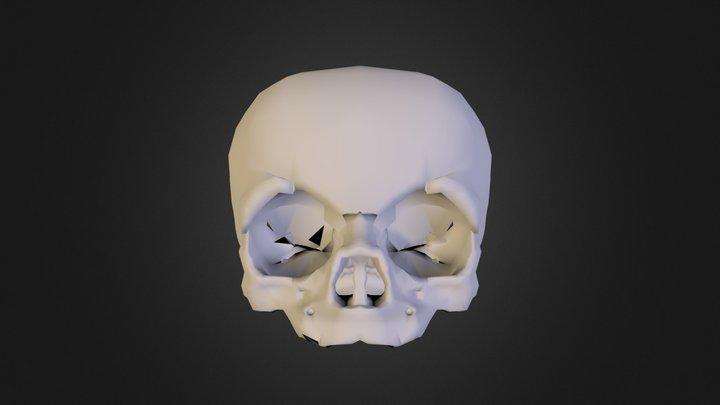 Fetal Skull 3D Model