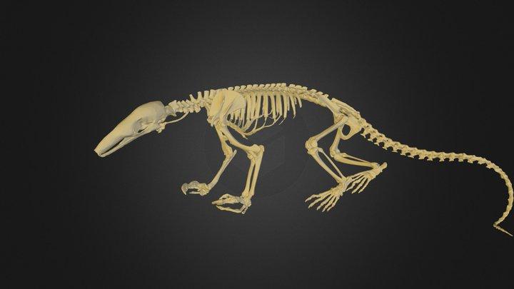 anteater.FBX 3D Model