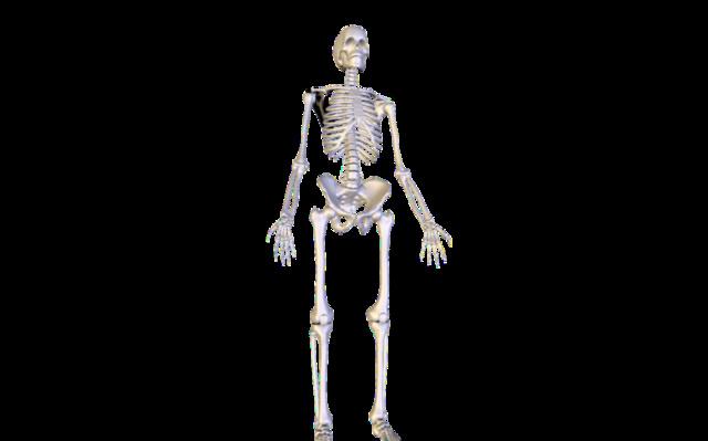 skeleton.zip 3D Model
